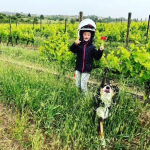 vignes Domaine Haut Courchamp
